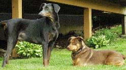 Doberman Petie and Mixed breed dog Nellie love their new home.