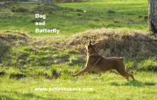 Dog and Butterfly Photo