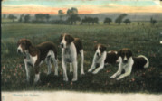 King's dogs, photo, postcard